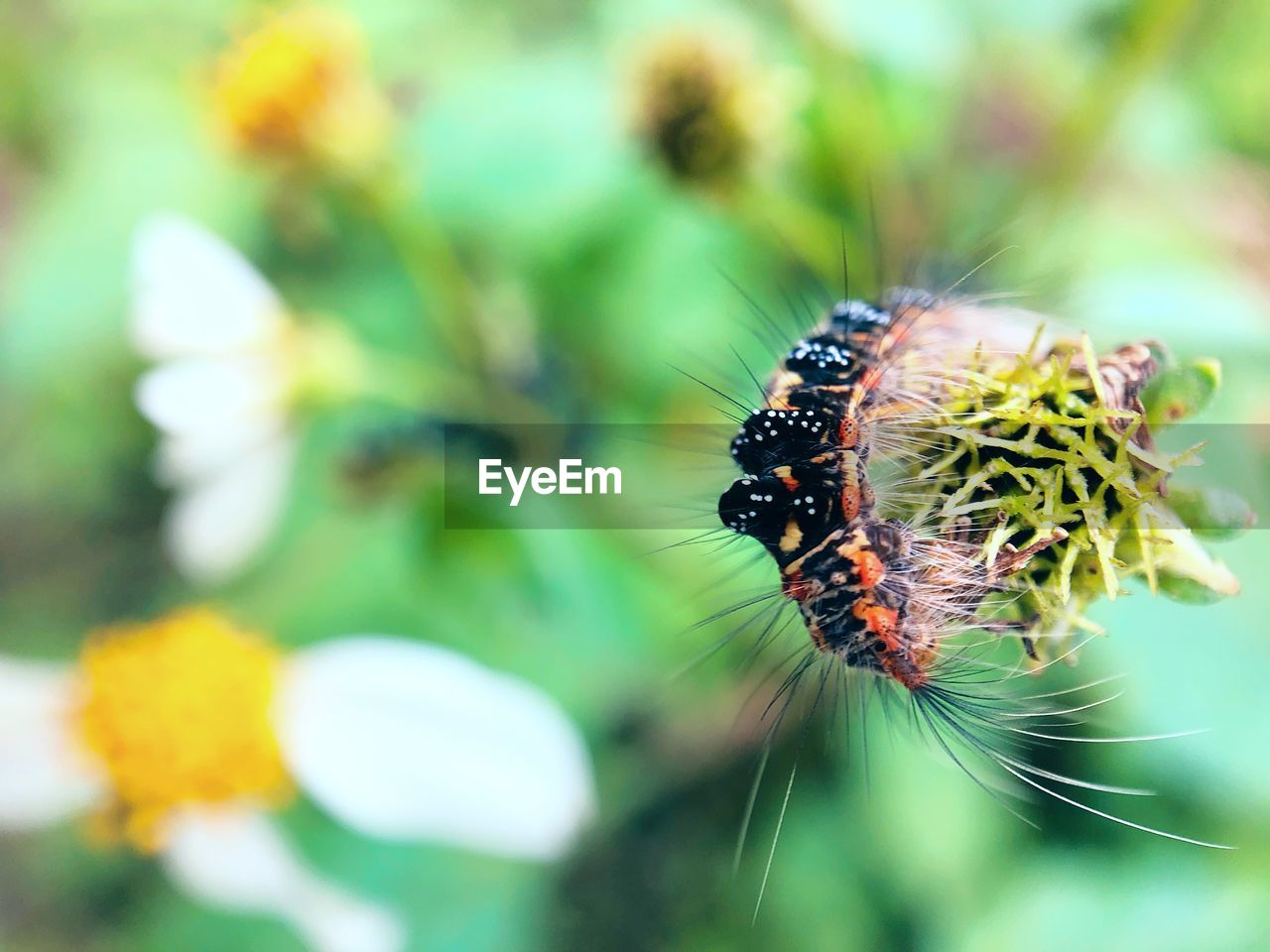 invertebrate, insect, animals in the wild, animal themes, plant, close-up, animal, one animal, animal wildlife, flower, fragility, flowering plant, beauty in nature, focus on foreground, vulnerability, no people, growth, day, freshness, flower head, outdoors, pollination, pollen