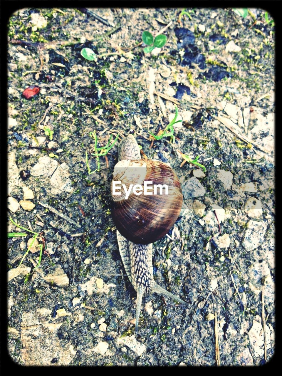 one animal, auto post production filter, wildlife, animal themes, snail, animals in the wild, gastropod, high angle view, day, no people, outdoors, nature, fragility, close-up, scenery