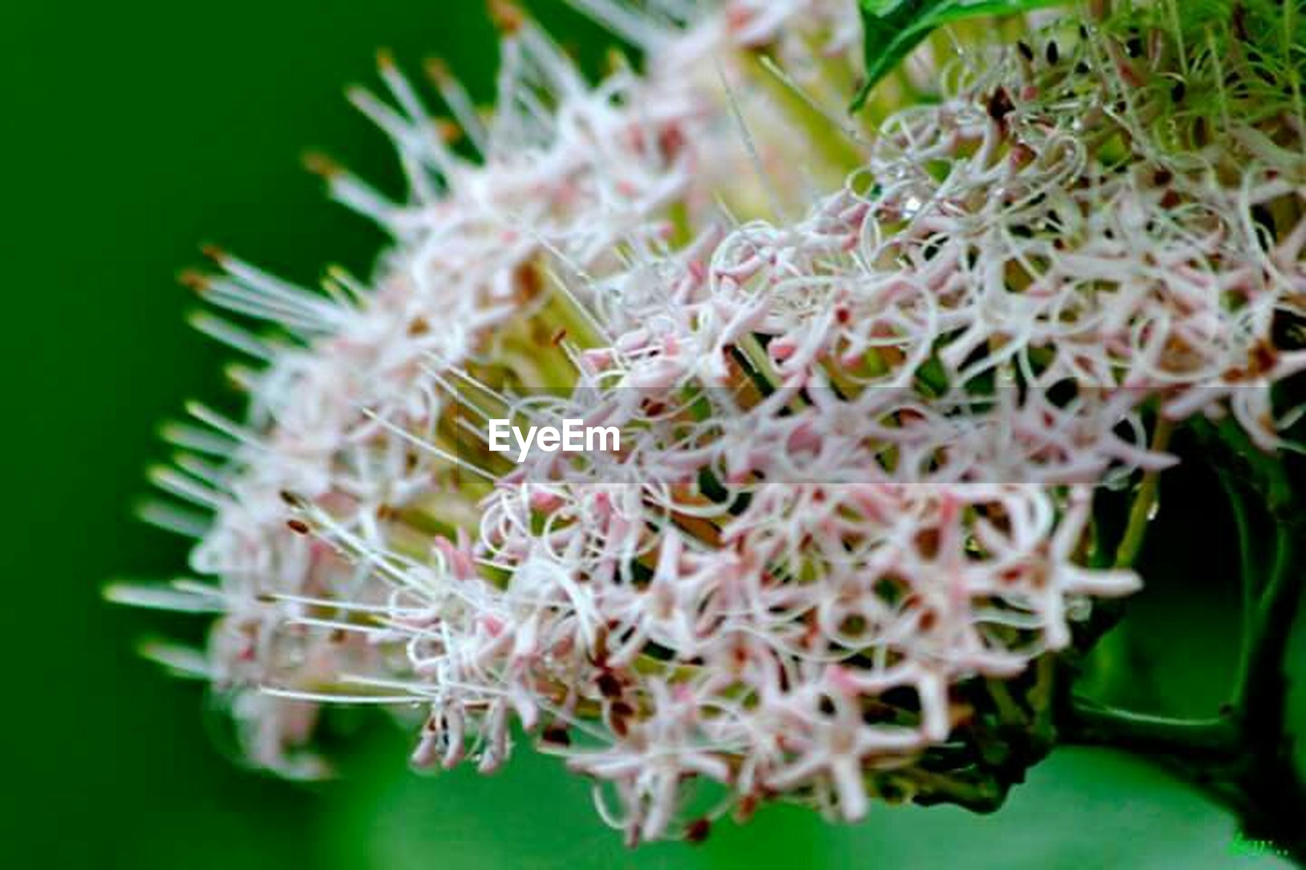 close-up, freshness, focus on foreground, selective focus, growth, flower, plant, fragility, nature, food and drink, food, white color, green color, no people, leaf, beauty in nature, stem, day, healthy eating, indoors