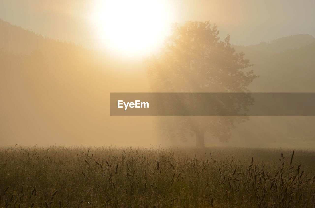 nature, beauty in nature, landscape, field, tranquility, scenics, growth, tranquil scene, idyllic, no people, fog, mist, hazy, tree, sun, outdoors, plant, day, sky, sunset, grass