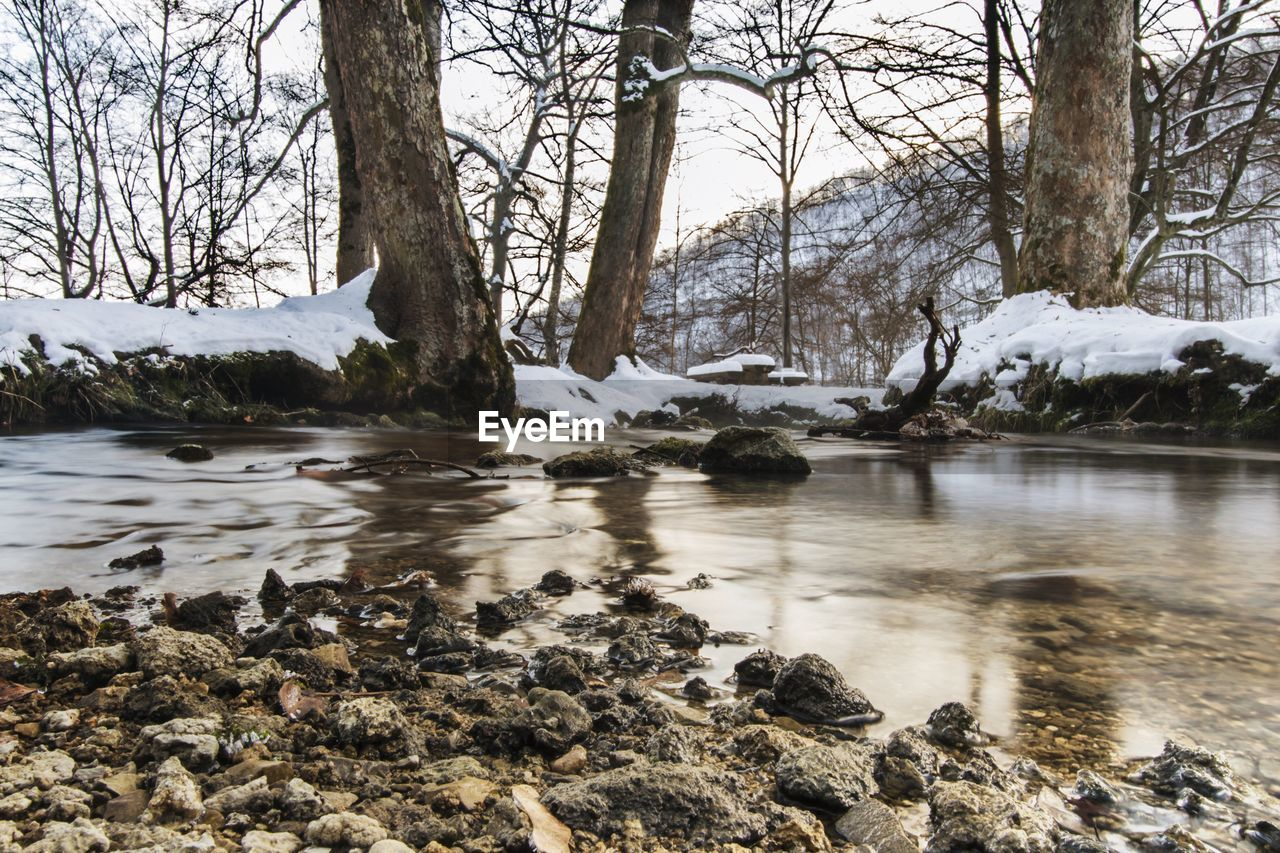 Shallow water against tree trunks in winter