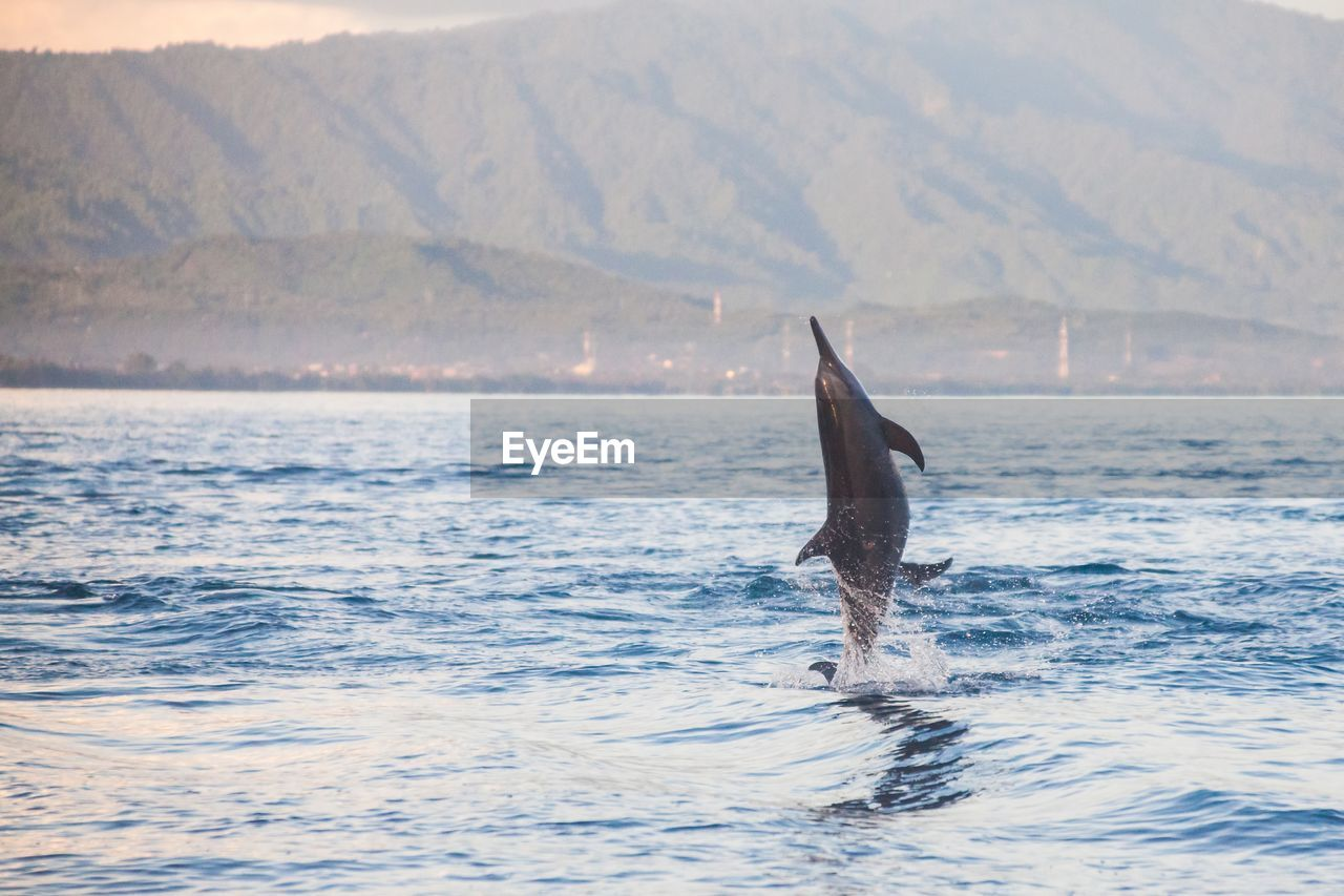 Dolphins jumping in sea against mountain