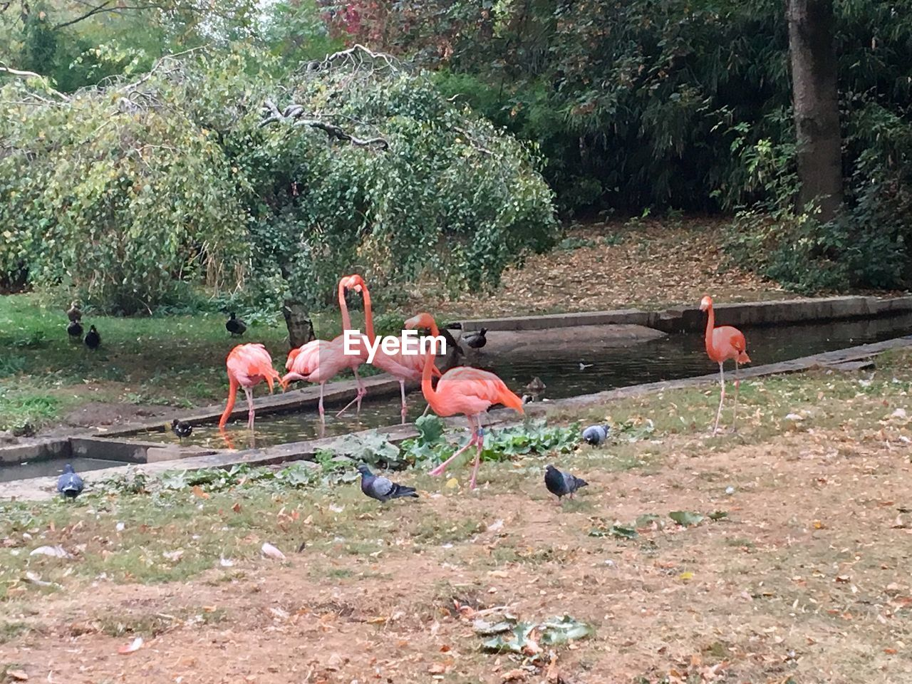 group of animals, animal themes, animal, plant, flamingo, bird, tree, vertebrate, animals in the wild, animal wildlife, day, nature, large group of animals, water, land, beauty in nature, no people, pink color, outdoors, flock of birds