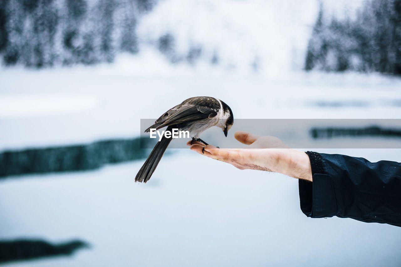 Close-Up Of Bird Perching On Human Hand