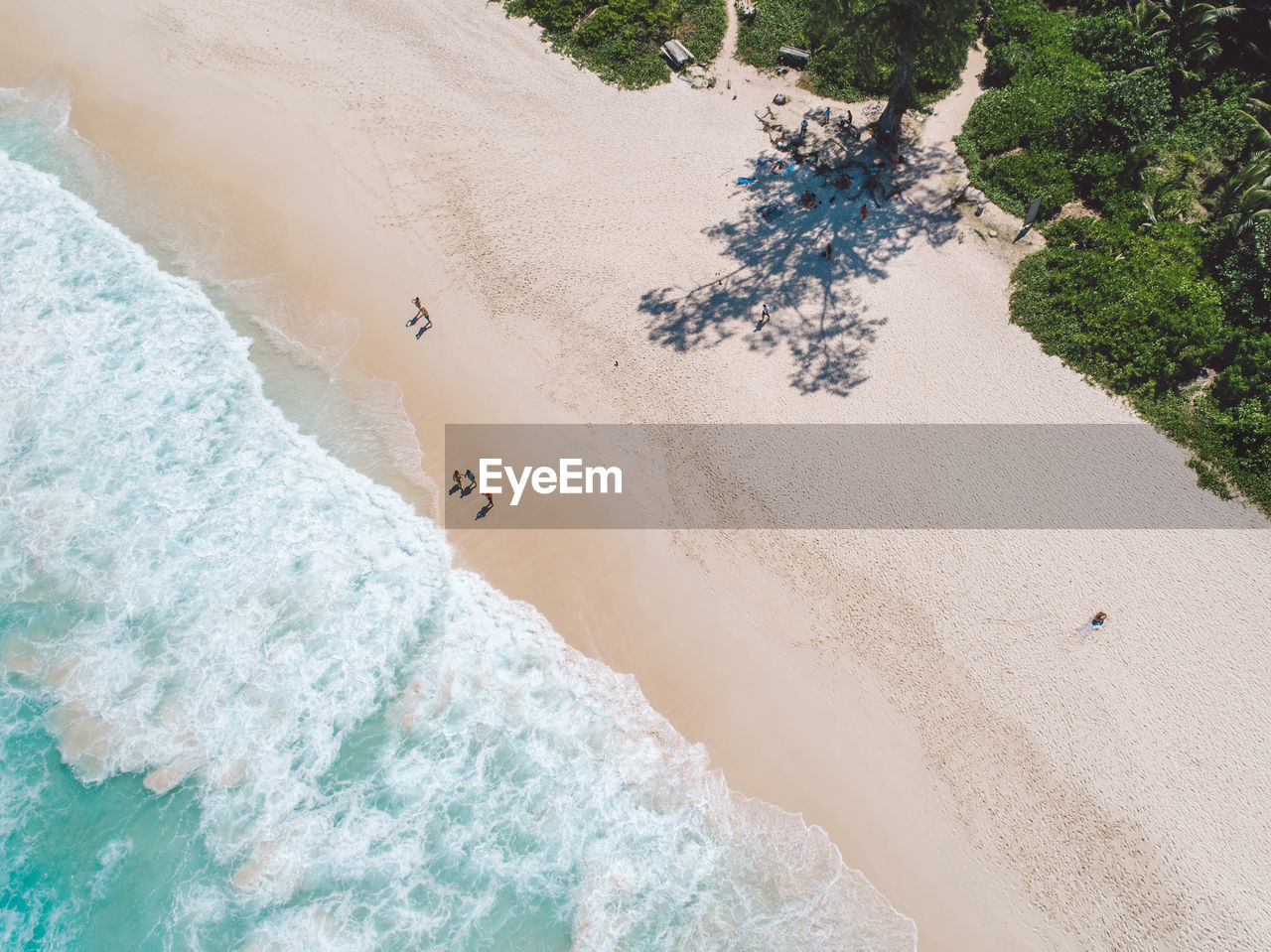 land, high angle view, beach, water, nature, sea, beauty in nature, day, sand, motion, sport, incidental people, plant, scenics - nature, tranquility, surfing, tree, animal
