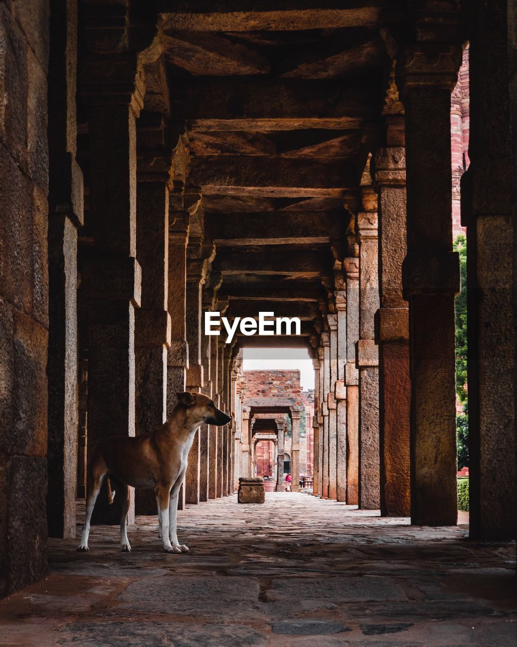 architecture, built structure, architectural column, animal, animal themes, one animal, domestic animals, mammal, pets, domestic, the past, dog, the way forward, canine, history, direction, vertebrate, building, day, full length, colonnade, ancient civilization