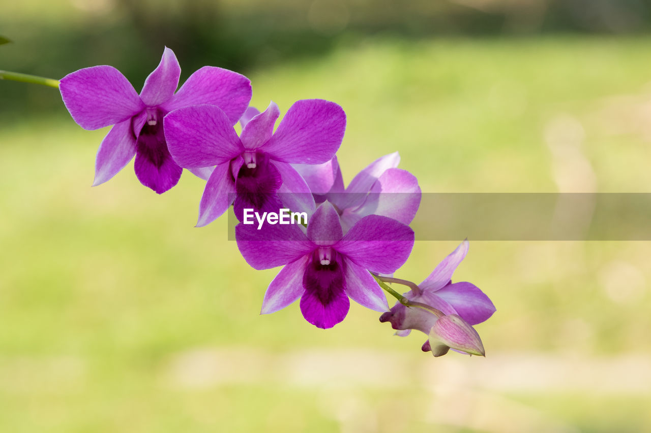 flowering plant, flower, plant, vulnerability, beauty in nature, petal, fragility, freshness, flower head, inflorescence, growth, close-up, focus on foreground, no people, purple, day, pink color, nature, botany, outdoors