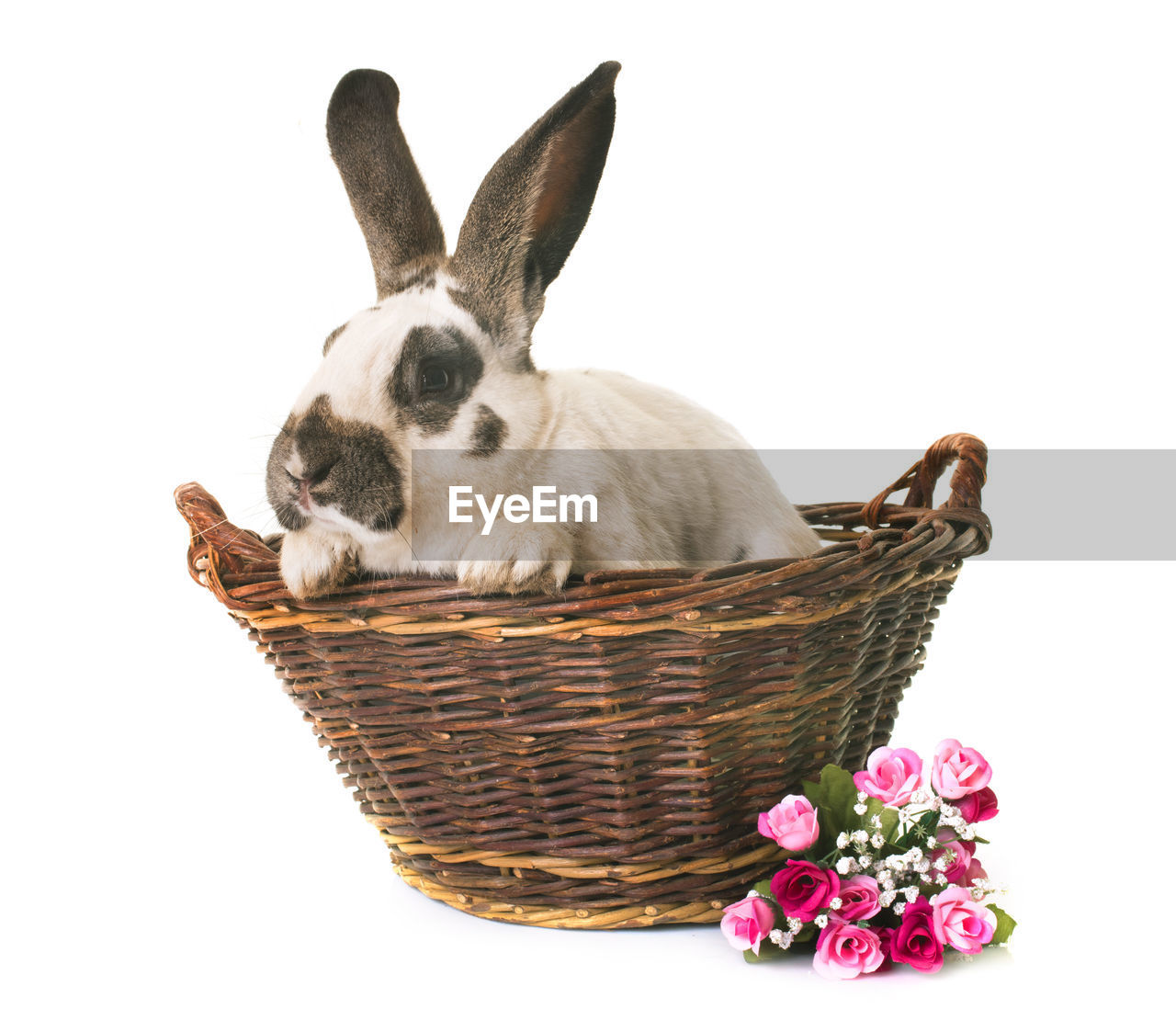 Rabbit In Basket By Flowers Against White Background