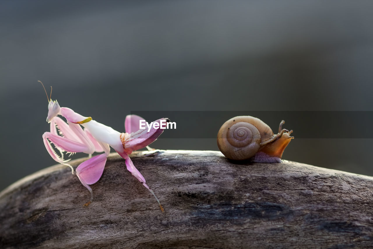 beauty in nature, fragility, close-up, flower, vulnerability, plant, flowering plant, animal, mollusk, animal themes, nature, snail, invertebrate, no people, animal wildlife, gastropod, solid, focus on foreground, animals in the wild, shell, outdoors, flower head