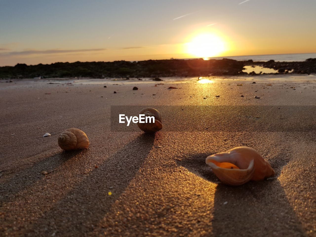 beach, sand, sunset, shore, nature, sea, sky, outdoors, beauty in nature, no people, seashell, sunlight, scenics, tranquil scene, pebble, tranquility, water, close-up, animal themes, day