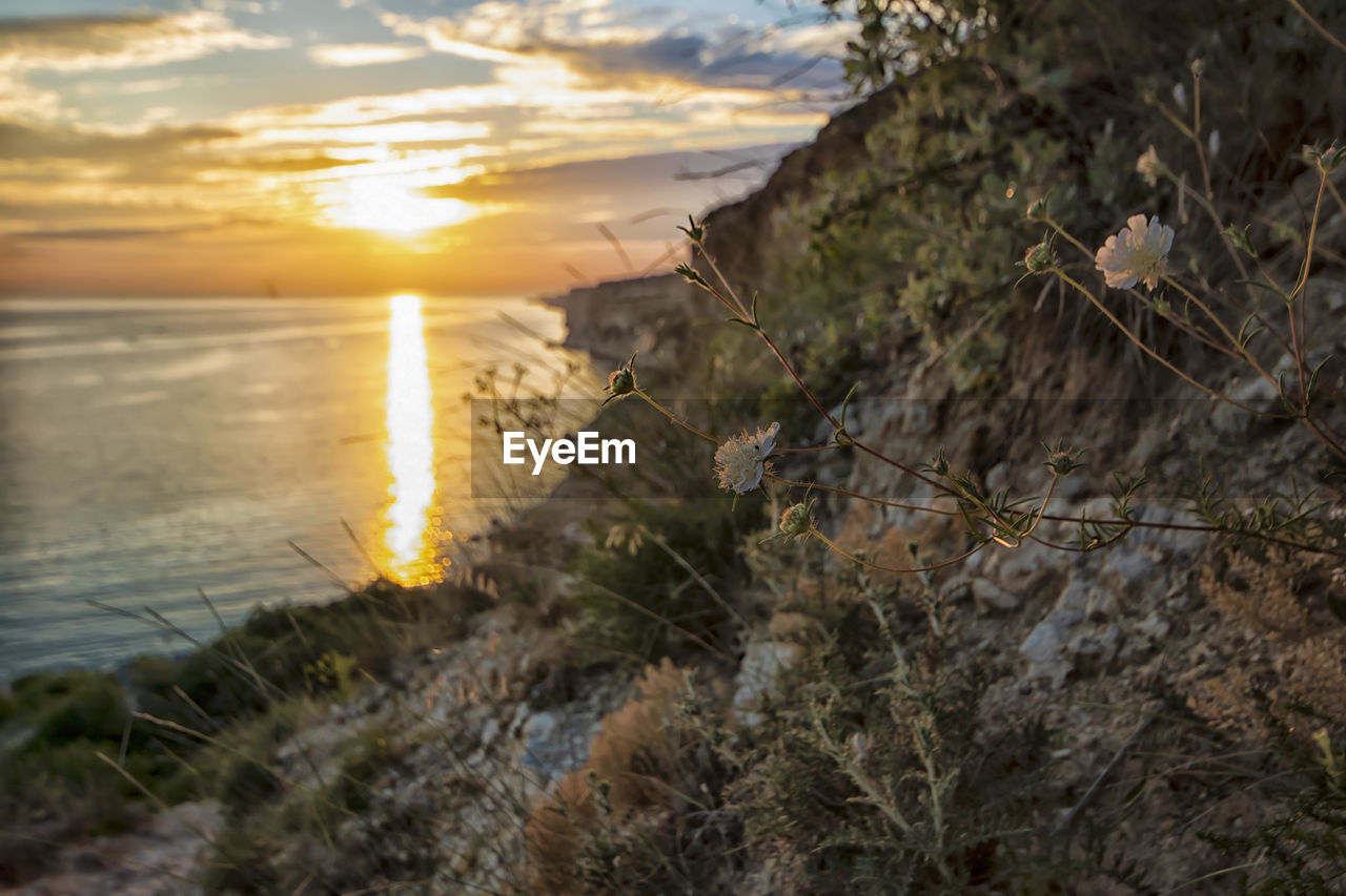 water, sea, plant, sunset, sky, nature, beauty in nature, tranquility, land, scenics - nature, cloud - sky, beach, no people, tranquil scene, growth, sunlight, outdoors, mountain, rock, horizon over water