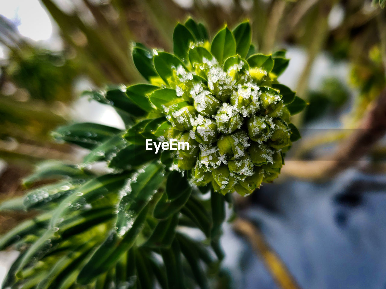 plant, growth, beauty in nature, close-up, flower, green color, focus on foreground, nature, flowering plant, day, no people, fragility, freshness, selective focus, vulnerability, leaf, plant part, outdoors, flower head, inflorescence