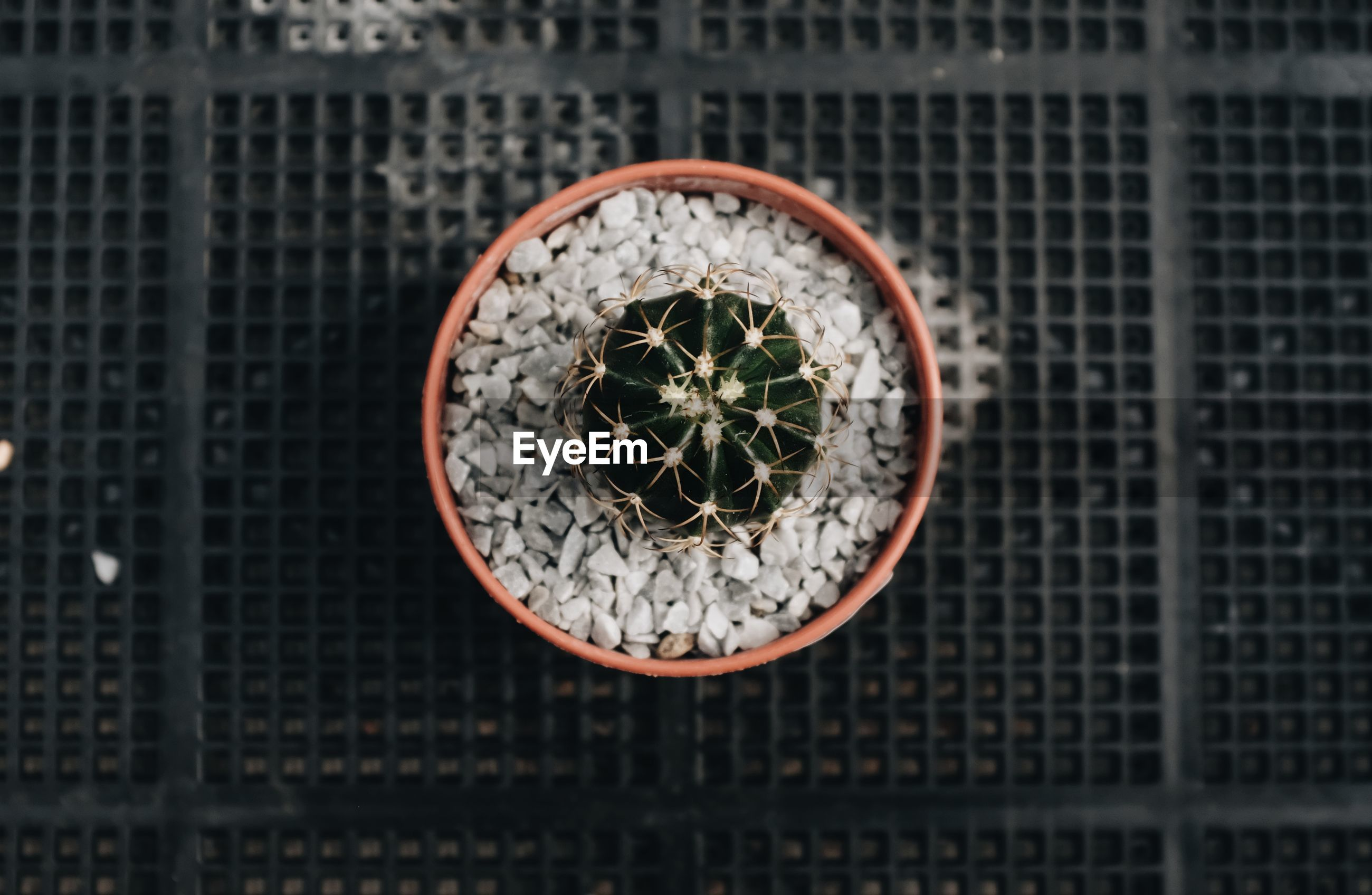 Close up of top view of a cactus in a pot