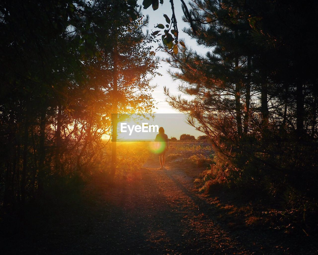 Rear View Of Person Walking On Footpath Amidst Trees During Sunset