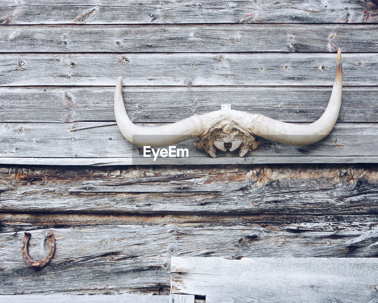 View Of Horn Hanging On Wooden Wall