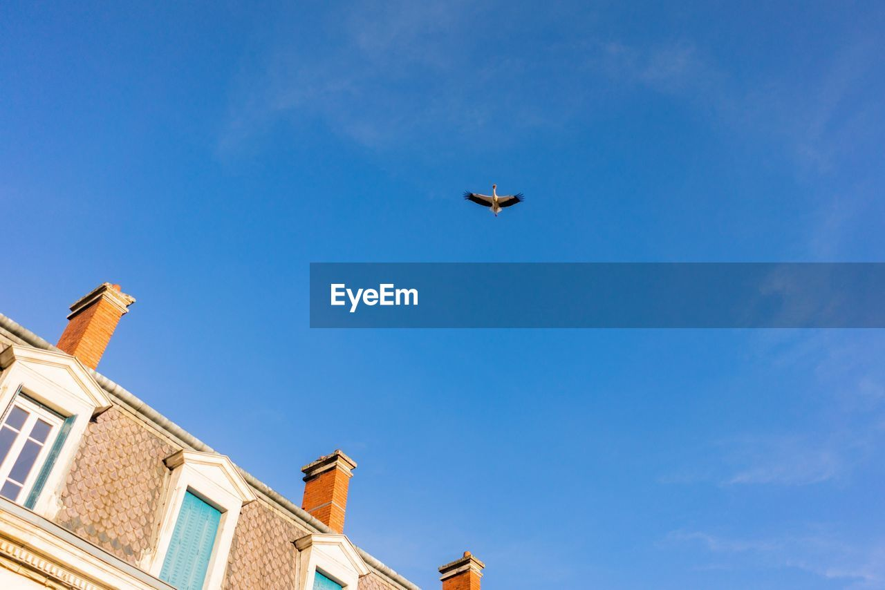 sky, architecture, low angle view, built structure, building exterior, building, flying, blue, nature, no people, day, one animal, animal themes, animal, animal wildlife, animals in the wild, bird, vertebrate, air vehicle, mid-air, outdoors