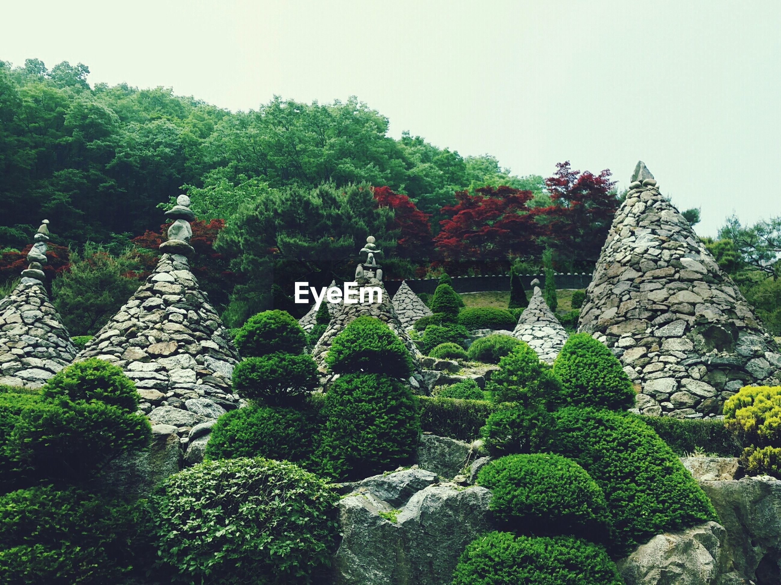 tree, growth, green color, plant, clear sky, nature, low angle view, built structure, tranquility, day, religion, lush foliage, outdoors, architecture, beauty in nature, formal garden, spirituality, sky, rock - object