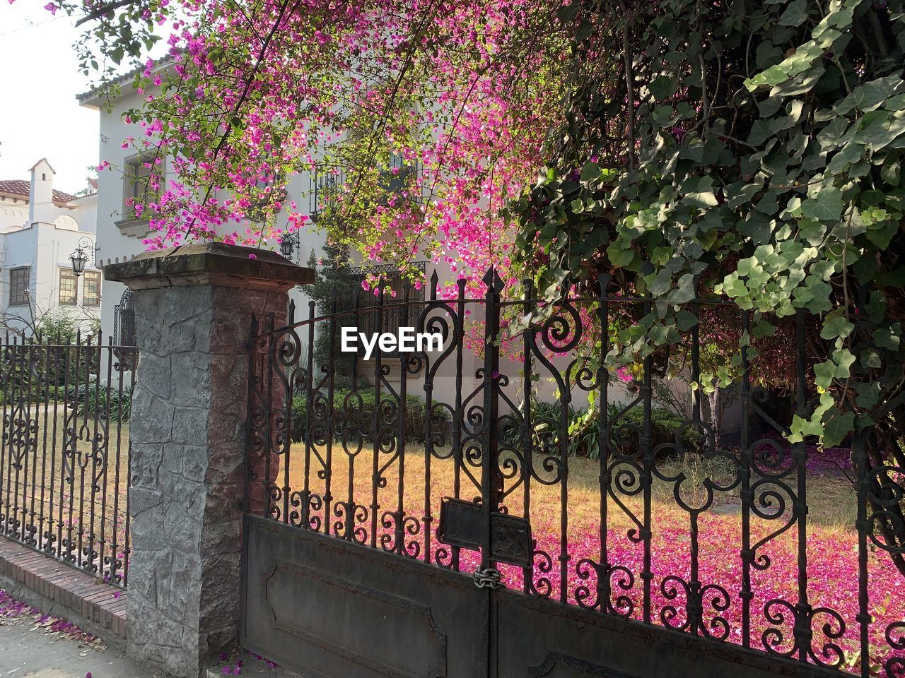 plant, built structure, architecture, growth, boundary, fence, railing, barrier, no people, nature, building exterior, gate, day, flower, tree, flowering plant, security, protection, safety, pink color, outdoors, wrought iron, iron - metal