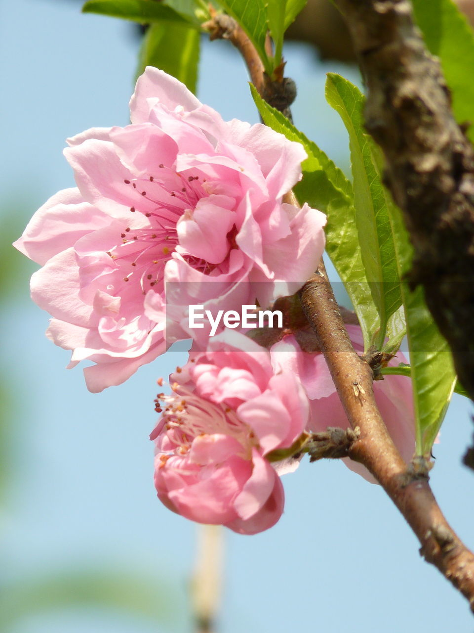 pink color, flower, fragility, nature, growth, beauty in nature, petal, close-up, no people, day, freshness, outdoors, plant, flower head, tree, blooming