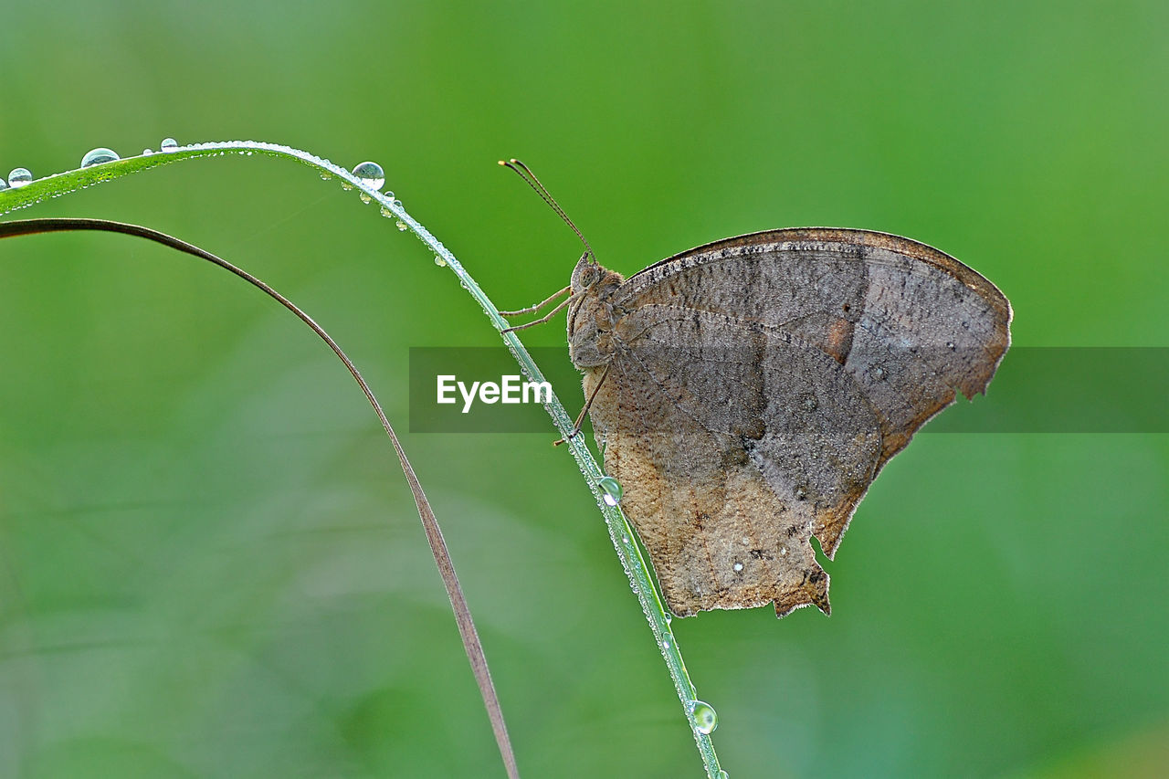 close-up, insect, no people, invertebrate, nature, plant, focus on foreground, leaf, plant part, beauty in nature, animals in the wild, animal, animal wildlife, one animal, animal themes, day, green color, animal wing, outdoors, fragility, butterfly - insect, butterfly