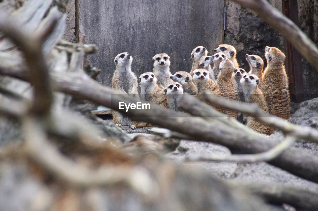 animal wildlife, animal themes, animals in the wild, selective focus, focus on background, day, no people, outdoors, young animal, mammal, nature, bird, close-up