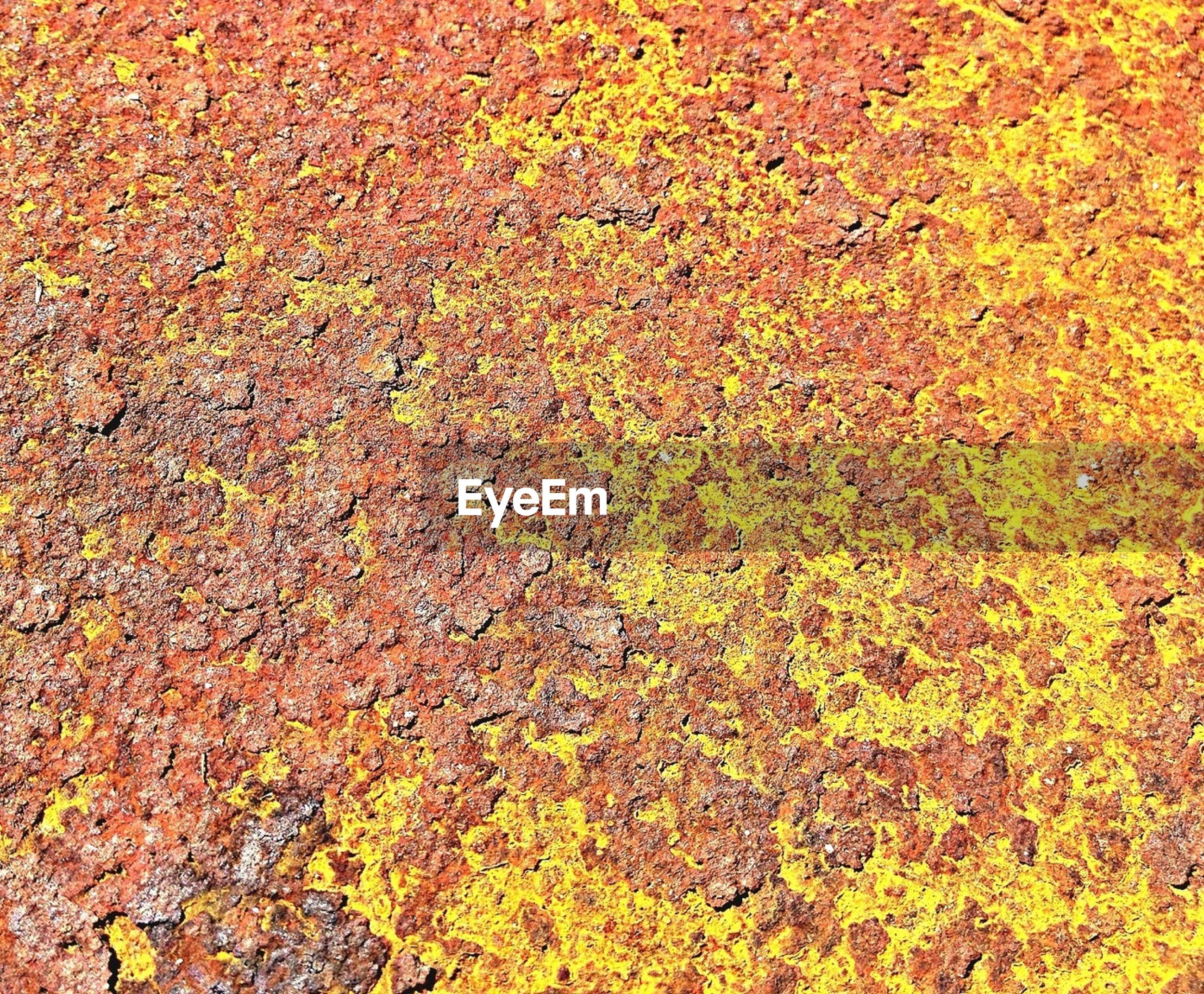 full frame, backgrounds, textured, autumn, change, yellow, orange color, day, no people, nature, outdoors, close-up, growth, leaf, red, pattern, season, wall - building feature, high angle view, detail