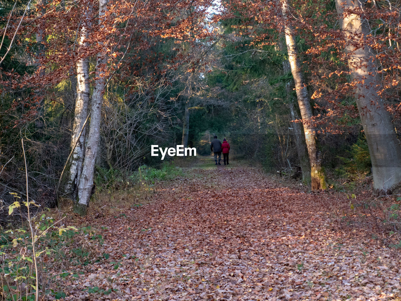 tree, forest, land, plant, autumn, rear view, real people, nature, plant part, change, leisure activity, day, leaf, lifestyles, walking, people, two people, full length, men, direction, outdoors, woodland
