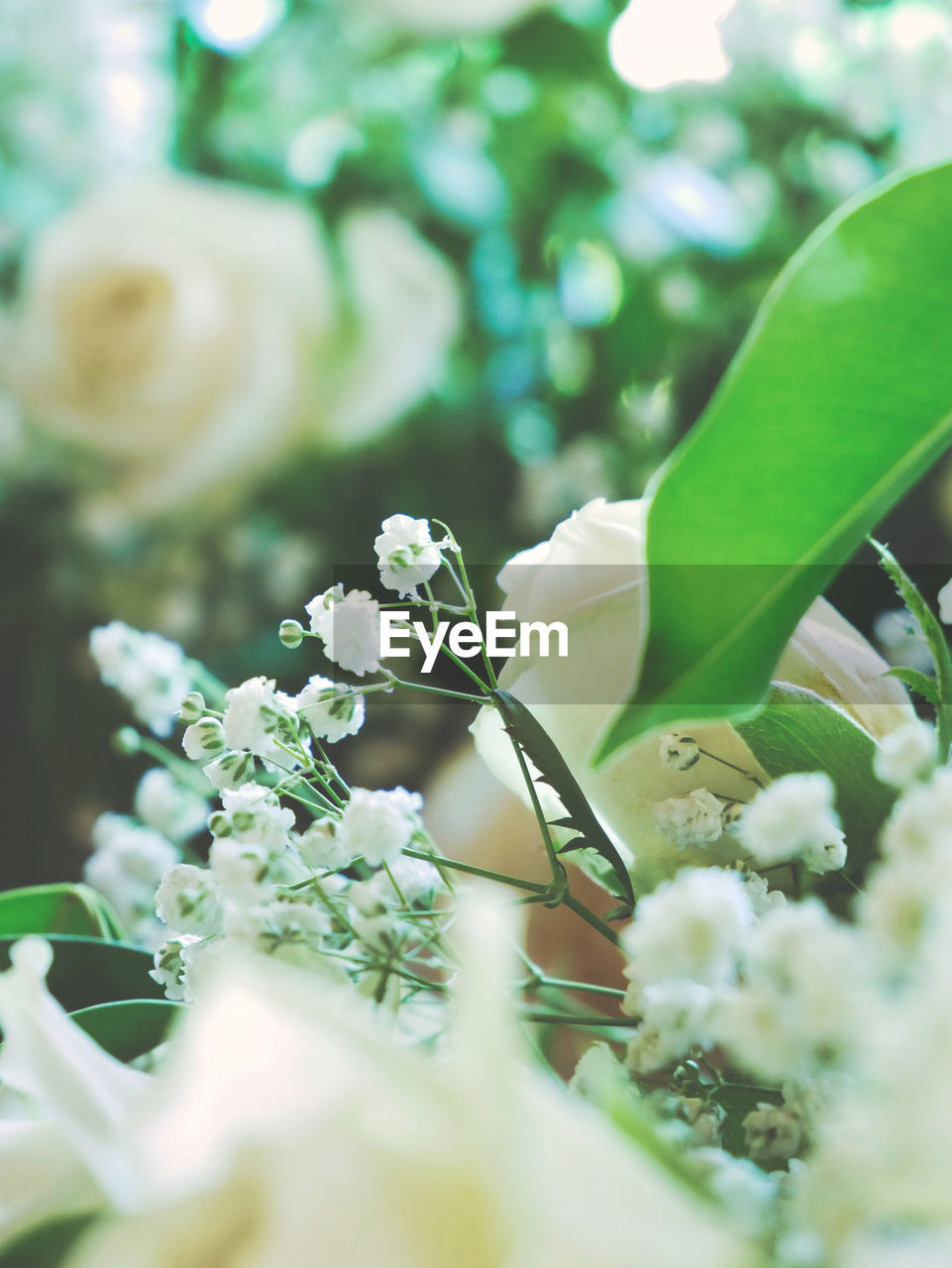 flowering plant, flower, plant, beauty in nature, growth, selective focus, vulnerability, fragility, freshness, close-up, no people, nature, white color, flower head, day, petal, inflorescence, leaf, plant part, green color, springtime