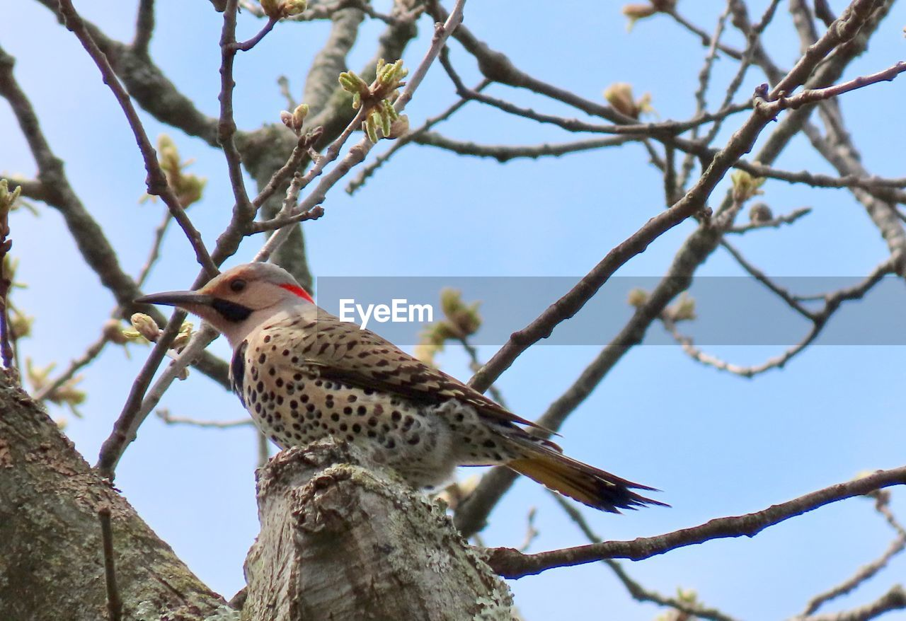 animal themes, tree, animal, branch, vertebrate, animals in the wild, animal wildlife, bird, low angle view, one animal, perching, plant, sky, nature, focus on foreground, no people, day, woodpecker, outdoors, clear sky