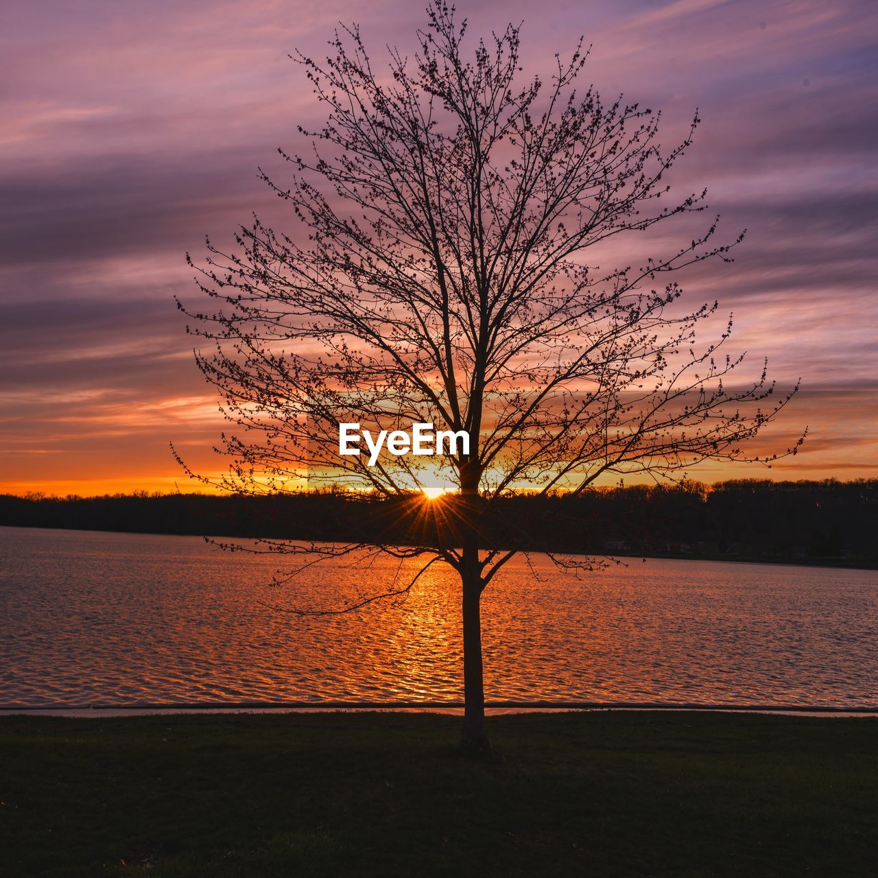 sunset, sky, beauty in nature, scenics - nature, orange color, tranquil scene, bare tree, tree, silhouette, tranquility, water, plant, cloud - sky, nature, lake, no people, idyllic, non-urban scene, branch, outdoors, isolated