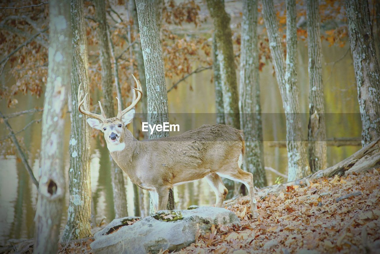 animal themes, one animal, animals in the wild, deer, animal wildlife, mammal, day, forest, nature, no people, young animal, outdoors, tree, beauty in nature
