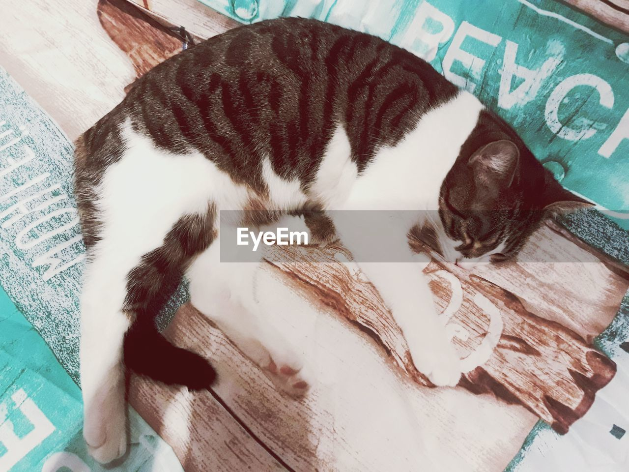 domestic, mammal, one animal, pets, domestic animals, animal themes, animal, vertebrate, relaxation, cat, feline, domestic cat, sleeping, lying down, resting, no people, indoors, high angle view, close-up, comfortable, whisker