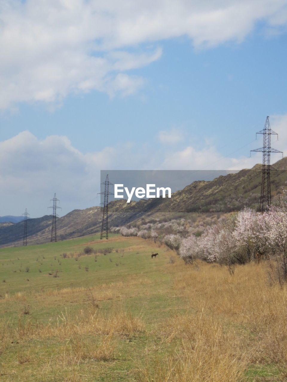 field, nature, landscape, day, sky, electricity pylon, electricity, no people, cable, connection, tranquil scene, grass, beauty in nature, fuel and power generation, outdoors, scenics, tranquility, mountain, tree