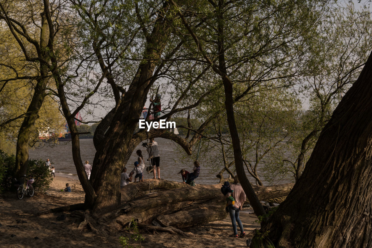 People standing by trees against lake