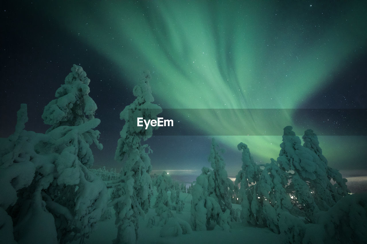 Snow Covered Trees Against Aurora Borealis At Night
