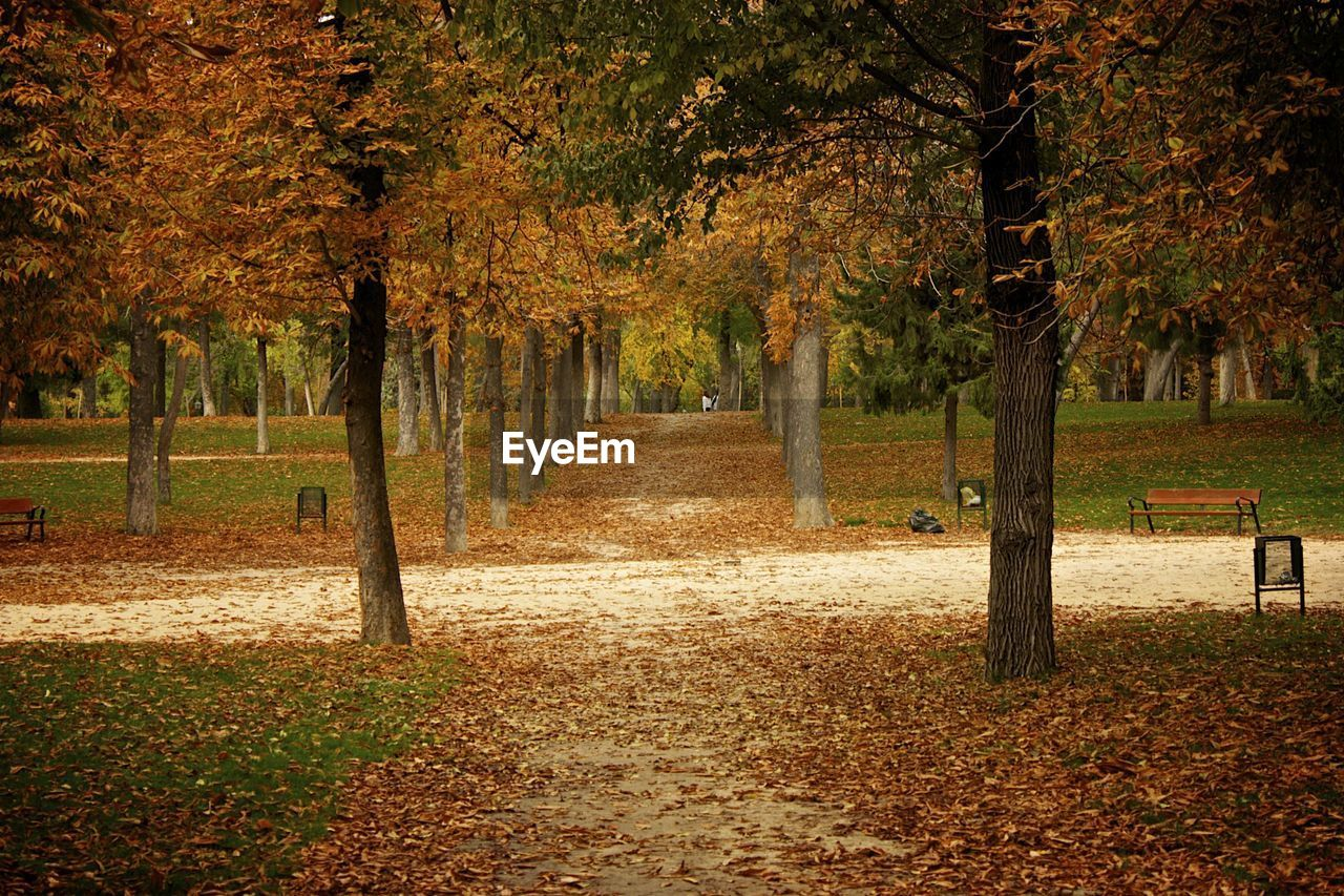 autumn, tree, change, nature, leaf, beauty in nature, park - man made space, tranquility, outdoors, scenics, day, tree trunk, growth, no people, grass