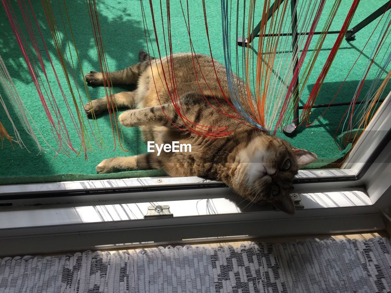 animal themes, animal, cat, feline, one animal, mammal, domestic cat, domestic, pets, domestic animals, vertebrate, indoors, relaxation, no people, resting, lying down, sleeping, whisker, seat, wood - material, tabby