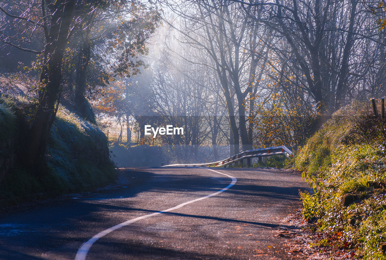 tree, plant, road, nature, the way forward, direction, no people, transportation, day, tranquility, beauty in nature, forest, land, marking, sign, outdoors, symbol, road marking, sunlight, growth, change