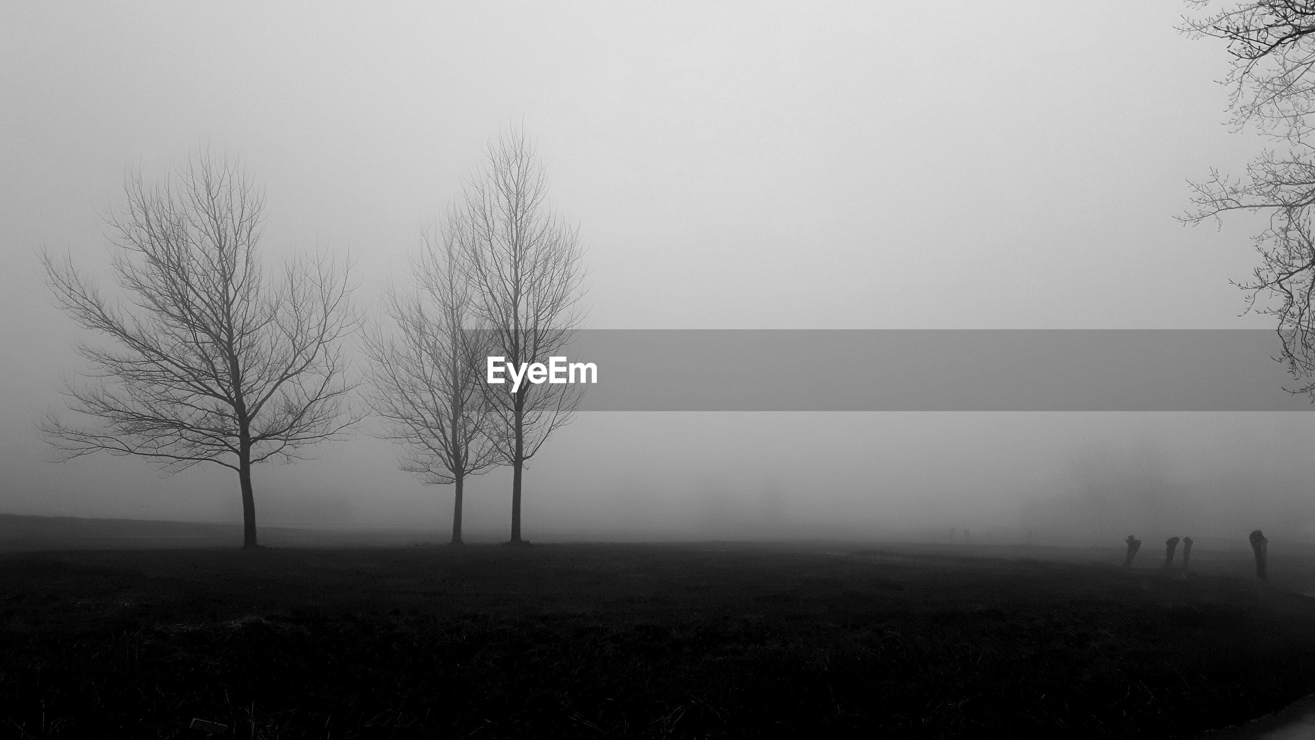 BARE TREE IN FOGGY WEATHER