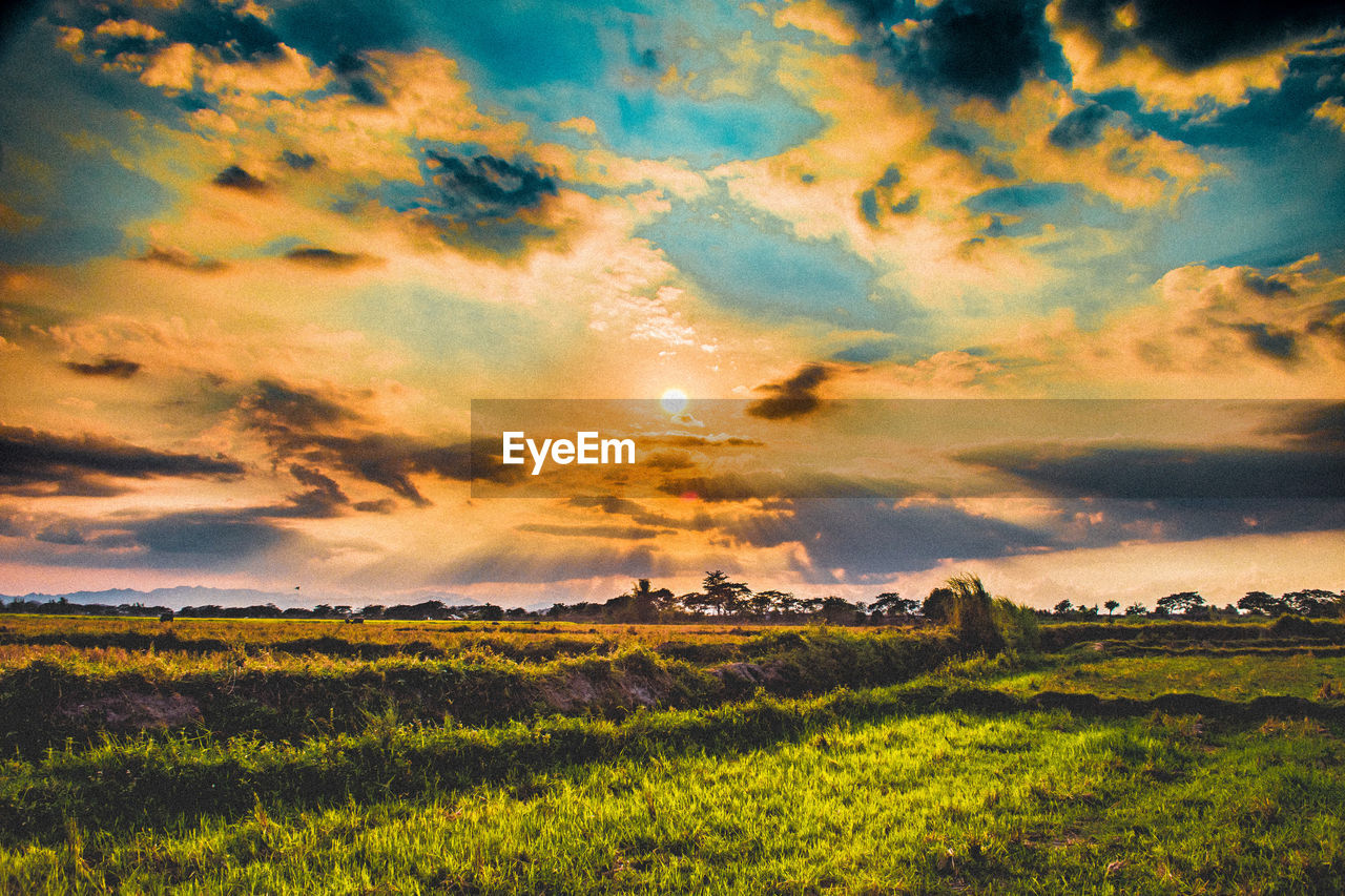 sky, cloud - sky, beauty in nature, scenics - nature, tranquil scene, tranquility, landscape, field, environment, land, plant, sunset, nature, no people, growth, rural scene, idyllic, agriculture, grass, non-urban scene, outdoors