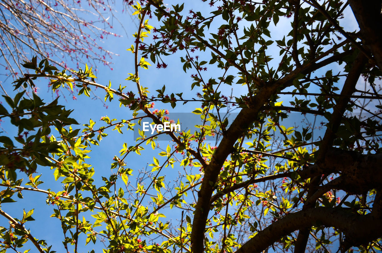tree, low angle view, plant, branch, sky, growth, beauty in nature, no people, nature, day, tranquility, plant part, leaf, clear sky, outdoors, sunlight, autumn, flowering plant, change, twig, tree canopy