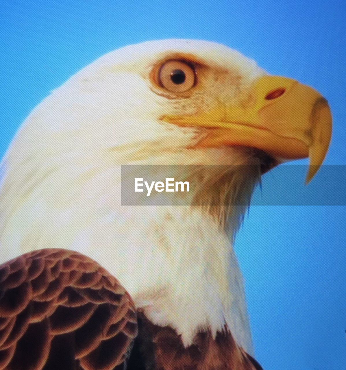 bird, one animal, animals in the wild, animal themes, beak, animal wildlife, close-up, animal head, bird of prey, day, no people, outdoors, nature, clear sky, beauty in nature, sky