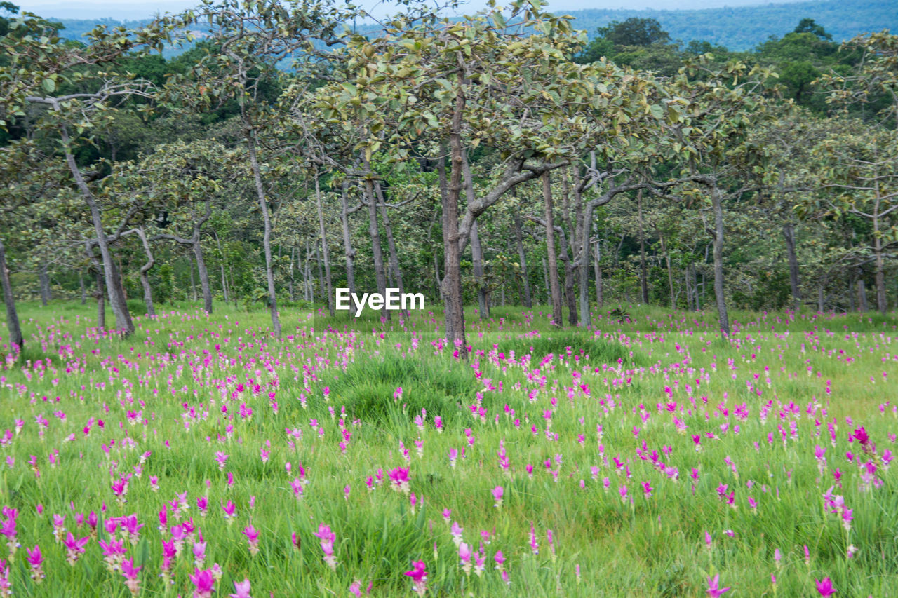 View of fresh pink flowers in field