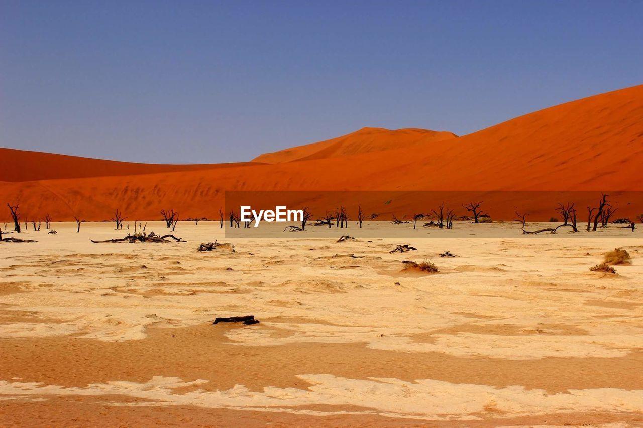 Dead Trees Against Sand Dunes In Dead Vlei