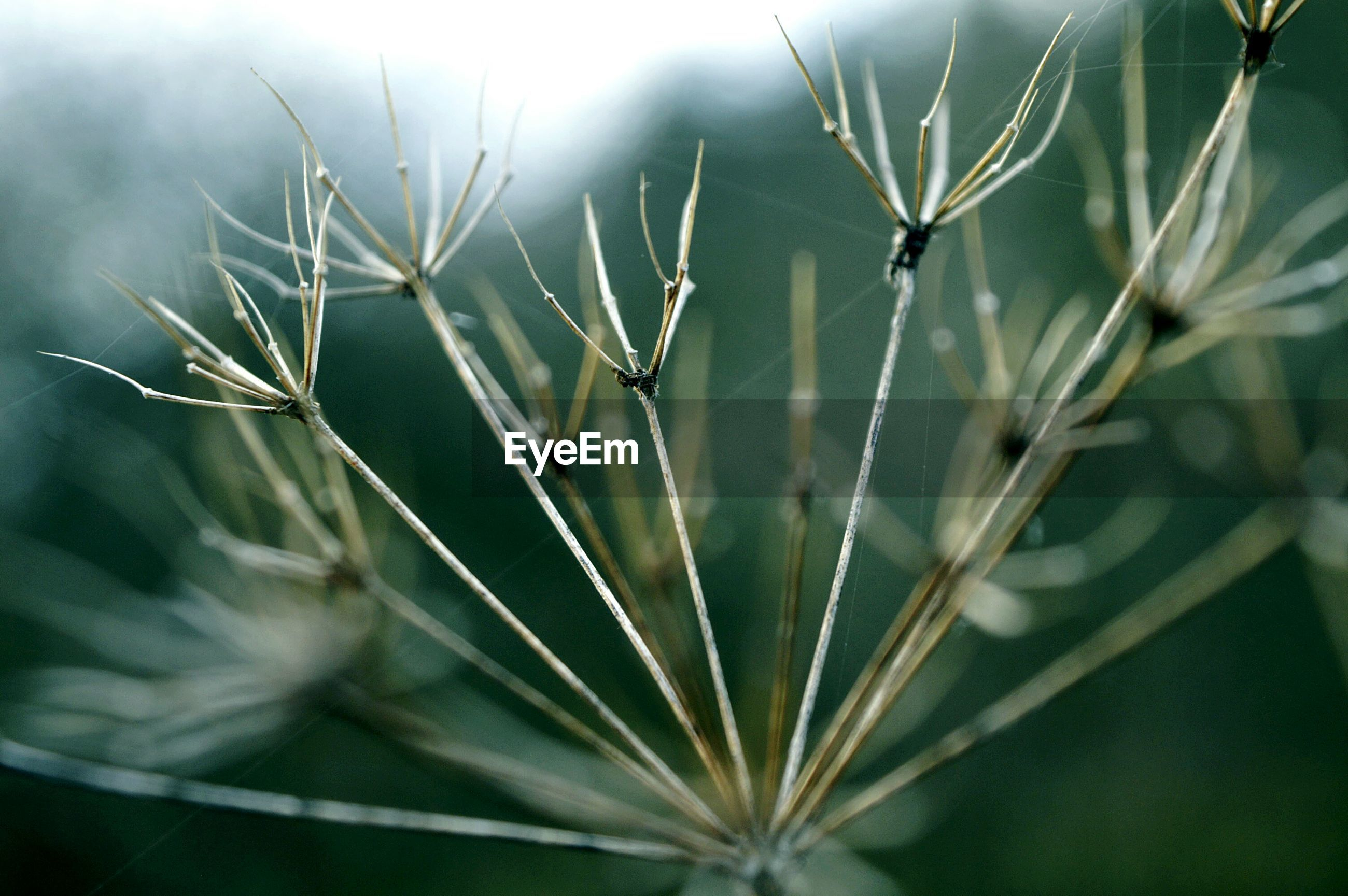nature, close-up, growth, plant, no people, day, outdoors, focus on foreground, beauty in nature, fragility, freshness