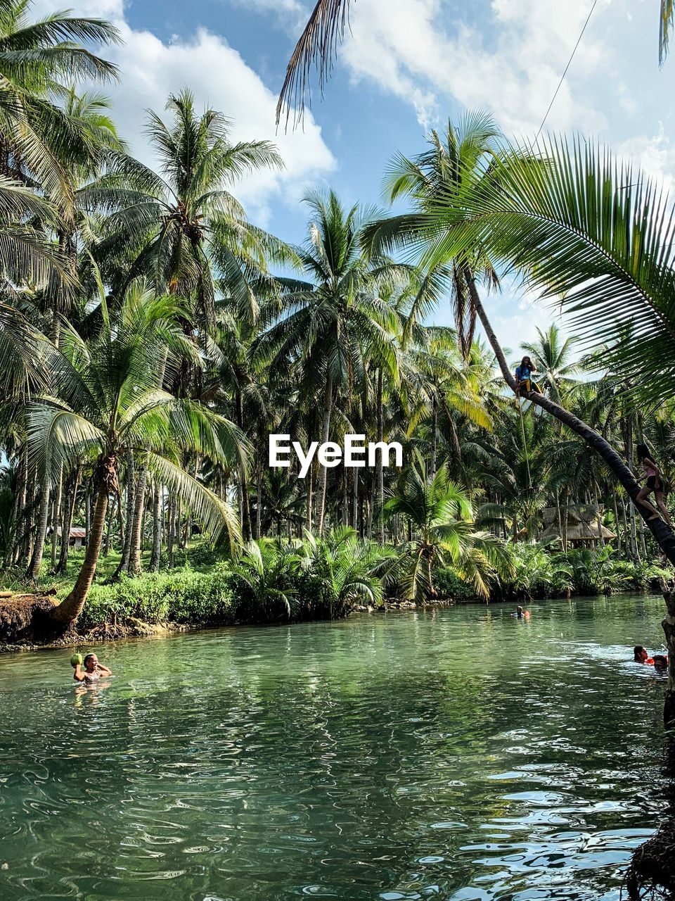 water, tree, palm tree, tropical climate, beauty in nature, waterfront, sky, plant, scenics - nature, nature, tranquility, tranquil scene, growth, day, sea, land, cloud - sky, non-urban scene, outdoors, coconut palm tree, tropical tree