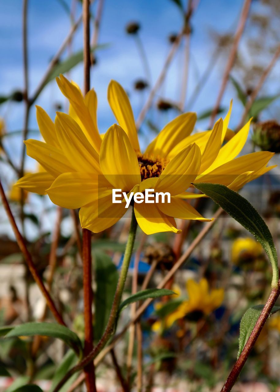 flower, flowering plant, yellow, plant, fragility, vulnerability, petal, beauty in nature, freshness, growth, close-up, flower head, focus on foreground, inflorescence, nature, no people, day, outdoors, plant stem, pollen