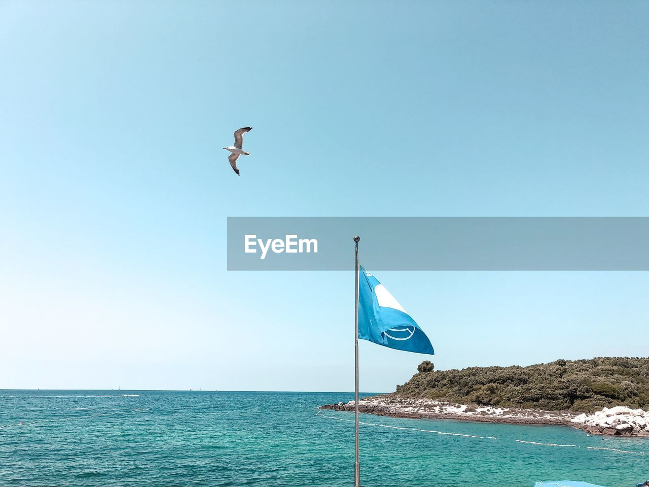 water, sky, sea, day, clear sky, flag, nature, vertebrate, copy space, animal themes, patriotism, bird, animal, animals in the wild, blue, flying, beauty in nature, no people, freedom, horizon over water, outdoors, wind, independence, national icon, seagull