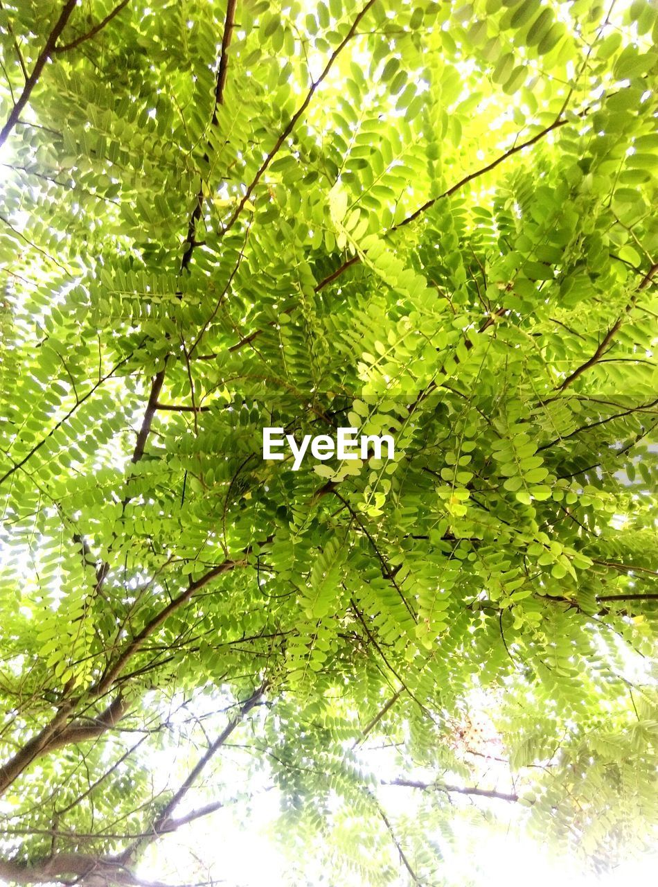 nature, green, growth, leaf, green color, day, harmony, beauty in nature, foliage, forest, branch, no people, outdoors, freshness