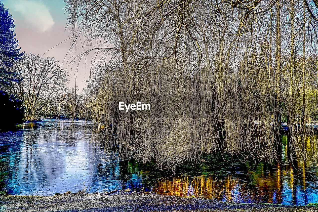 water, tree, reflection, bare tree, nature, tranquility, lake, beauty in nature, outdoors, tranquil scene, no people, scenics, growth, day, forest, sky, flood